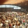 [Compostela] O peche do Mercado Nacional de Gando de Amio